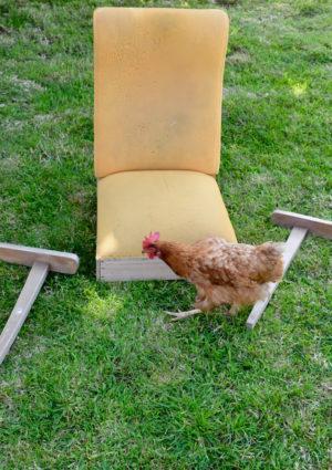 fauteuil-poule-recadr